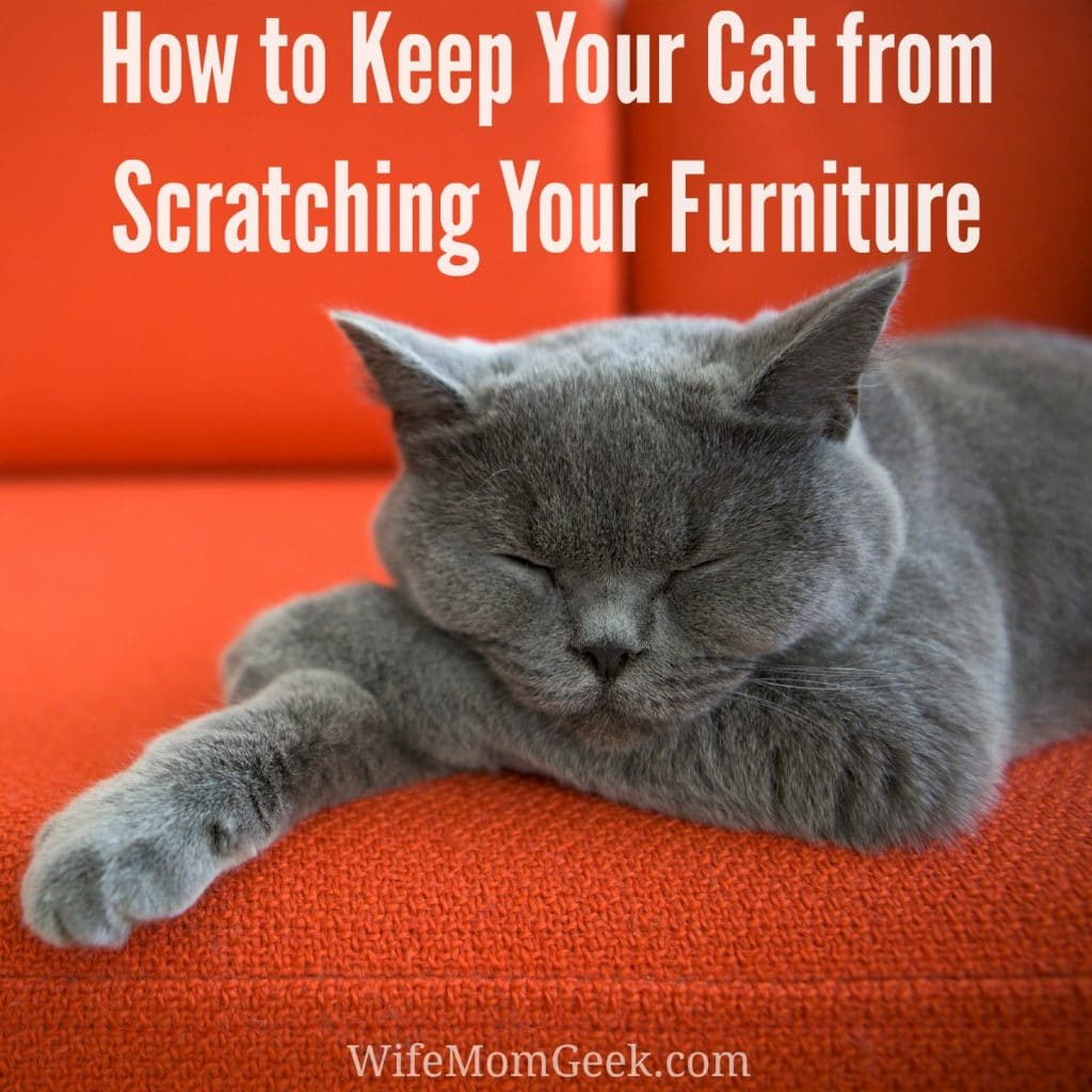 How Do You Keep Your Cat From Scratching The Furniture