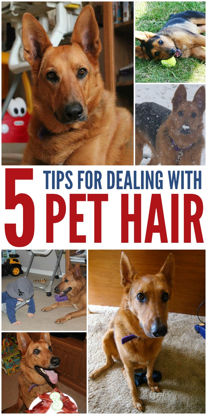 5 Tips for Dealing With Pet Hair