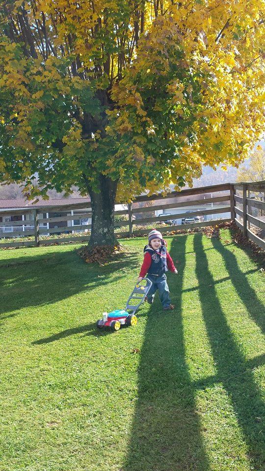 Tree in fall 2