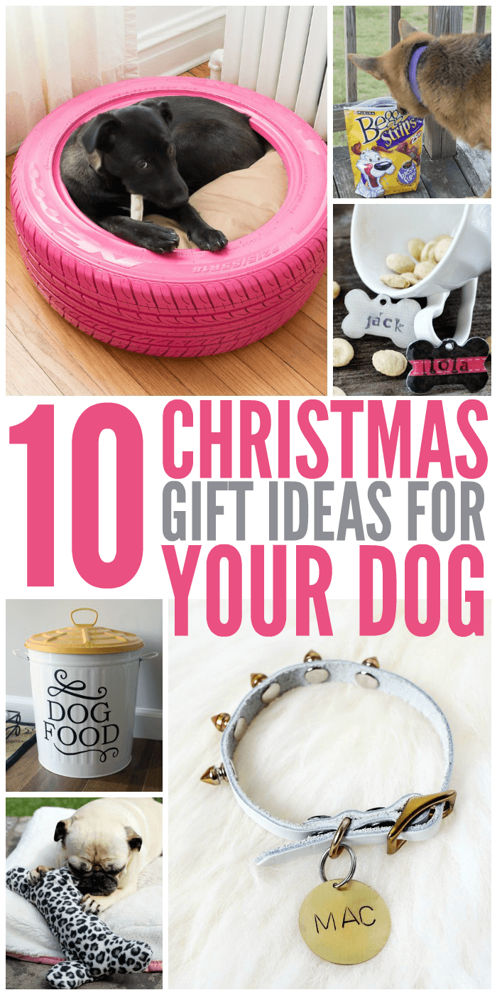 10 Christmas Gift Ideas for Your Dog - Glue Sticks and Gumdrops