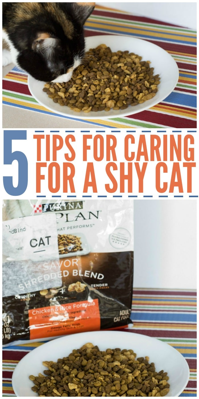 5 Tips for Caring for a Shy Cat