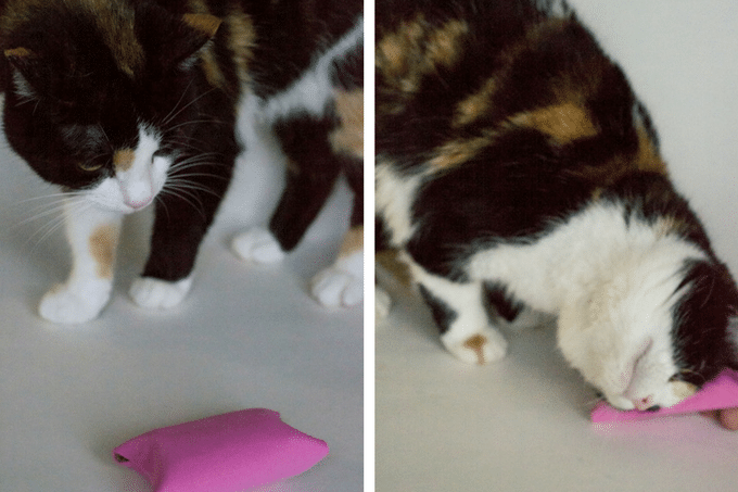 Rosie with diy cat toy