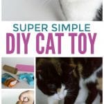 DIY Cat Toy: Pampering Your Kitty