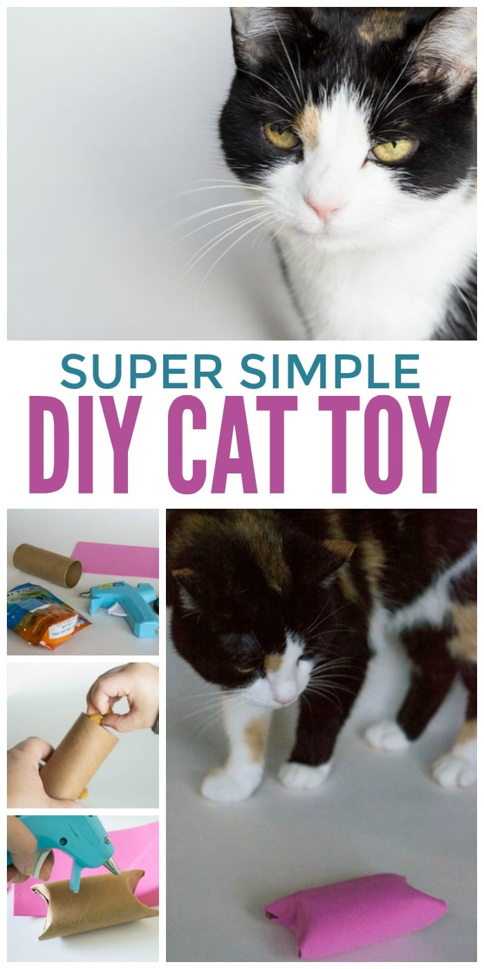 A super simple diy cat toy from a toilet paper roll - fill it with your cats favorite DentaLife treats!