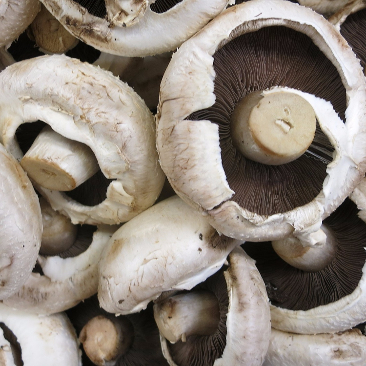 portobello mushrooms are a great low carb substitution for buns!