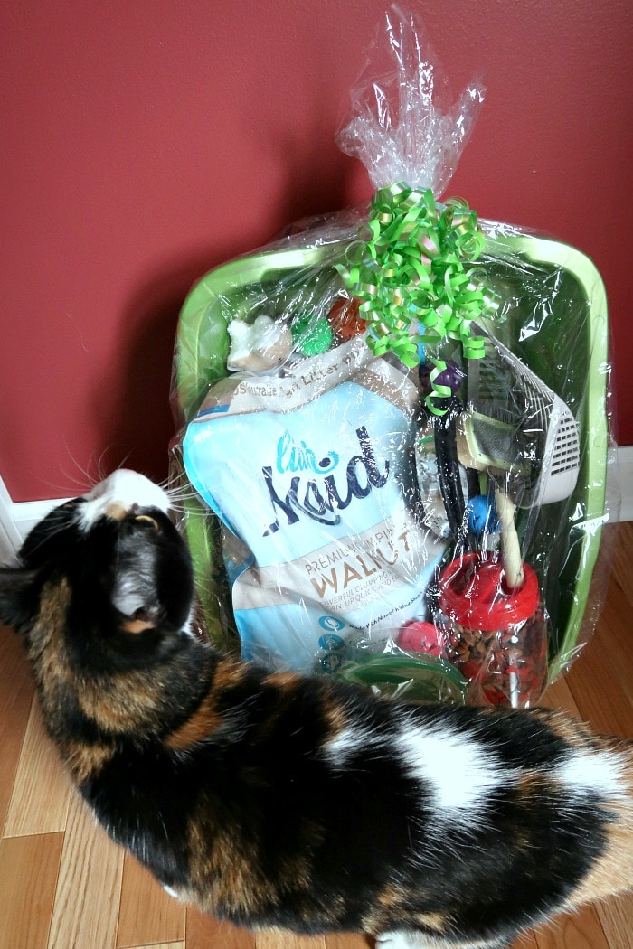 Welcoming a Cat Home - Essentials for First Time Cat Owners