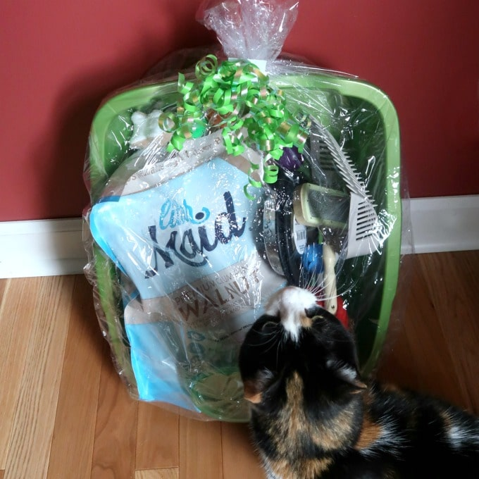 10 Essentials For First Time Cat Owners