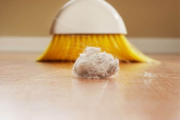learning how to get rid of dust bunnies will help you keep a cleaner home
