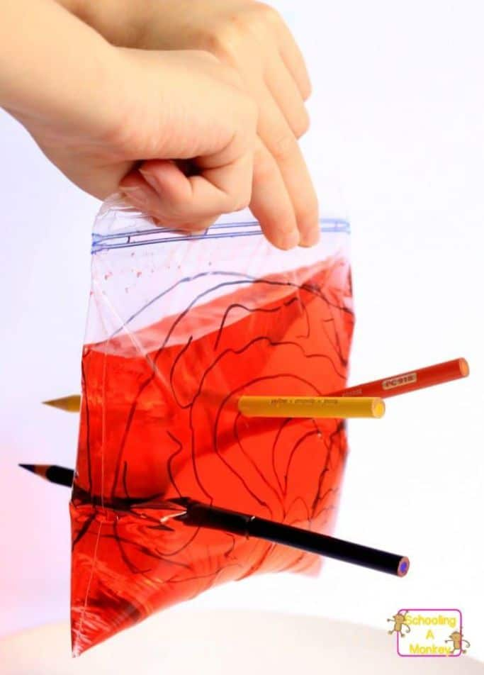 plastic baggie with red liquid with sharp pencils poking through the bag